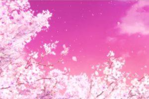 Hyouka, cherry blossom, 桜